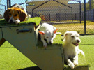 Cypress Pet Resort Daycare