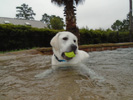 Playing Catch in Pool