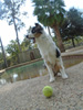 Playing Catch by the Pool